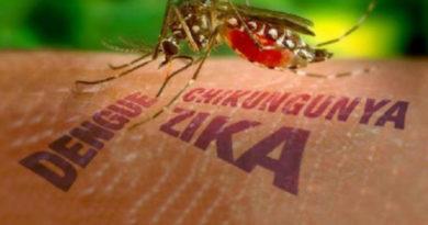 Brasileira cria biorepelente que protege  até 60 dias contra febre amarela